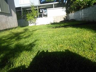 芝 種まき 西洋